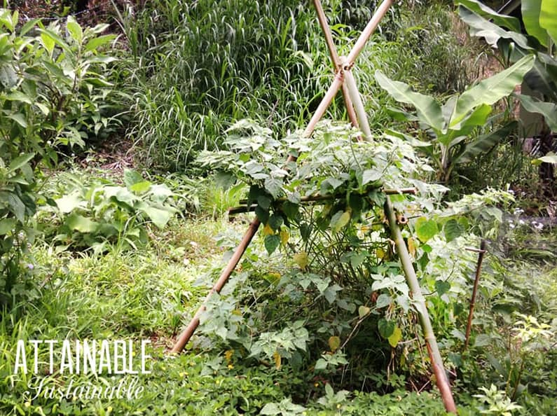 Bamboo TRELLIS DIY for gradening