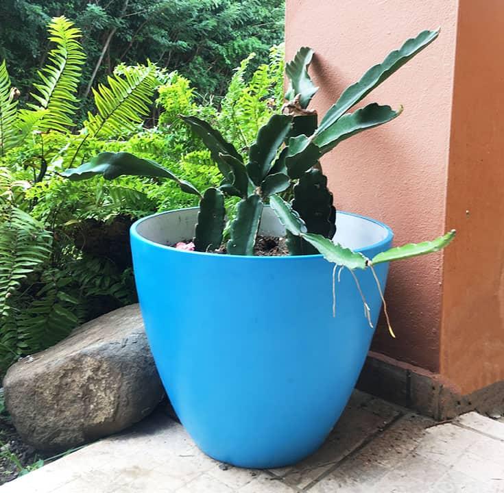 repurposed plastic planter