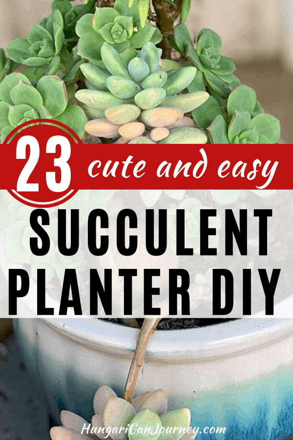 arrangements with succulents