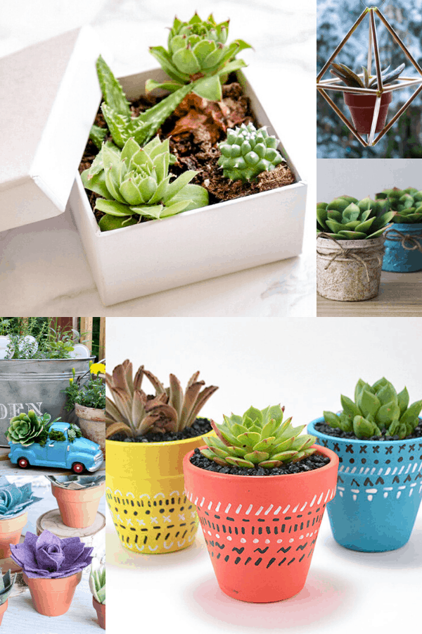 how to pot succulents outdoors