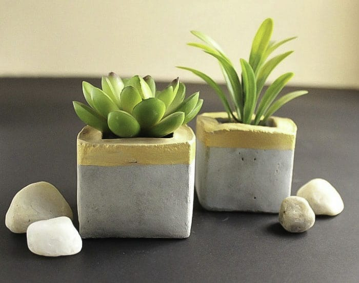 succulent container ideas