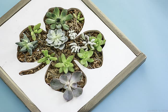 succulents in planters