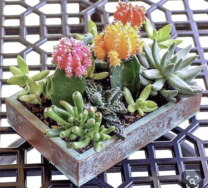 succulent planting pots