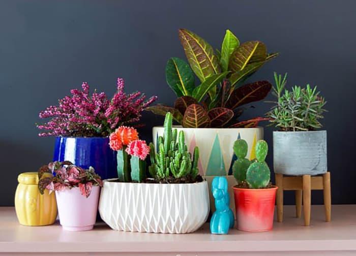 succulent garden arrangements