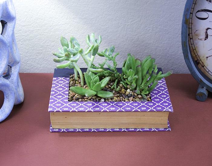 succulent garden ideas indoor