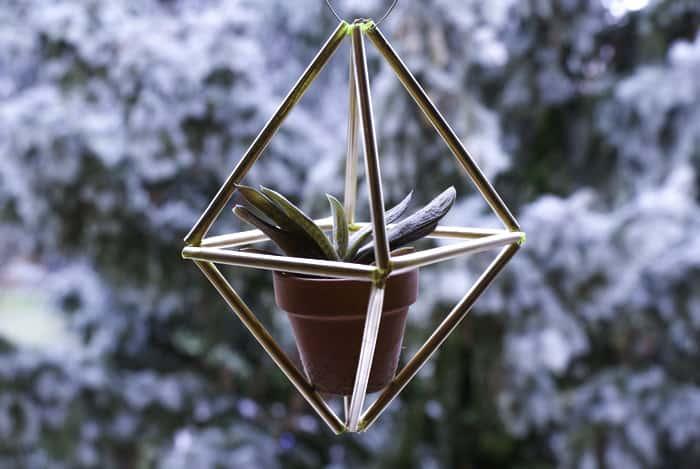 hanging succulent ideas