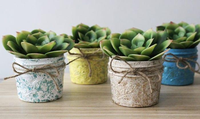 succulent plant decor ideas