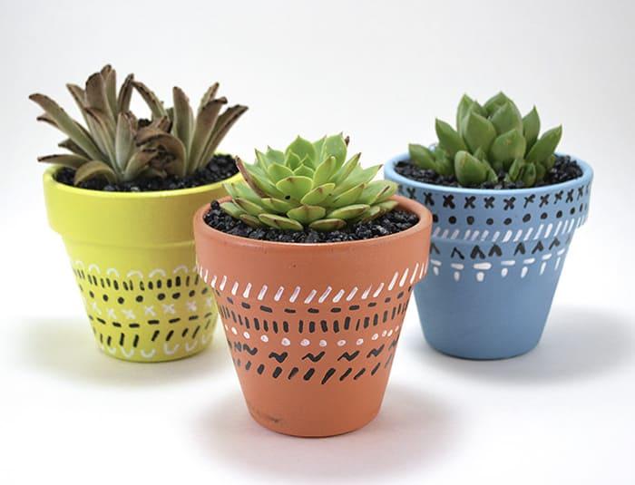 tiny succulents in pots