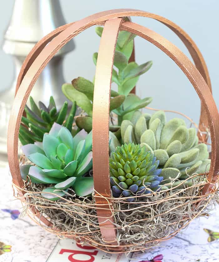 design with succulents
