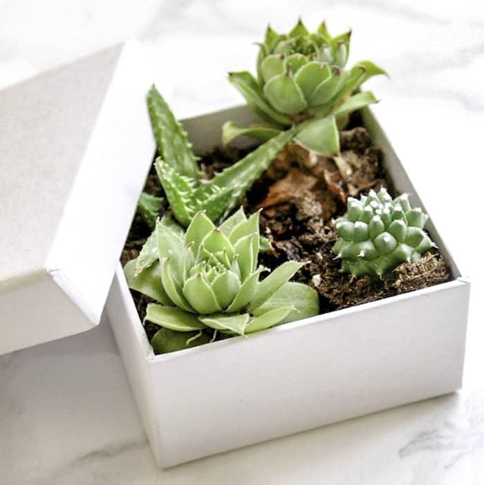 ideas for succulent plants