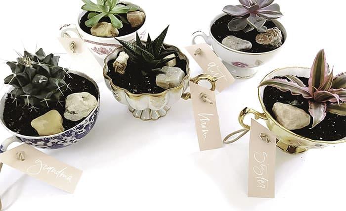 mini pot for succulent