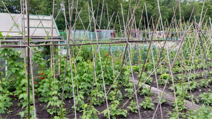 backyard sustainable living