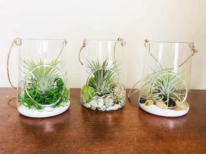 air plant terrarium DIY kit
