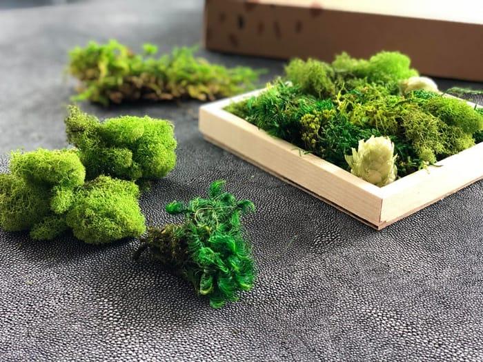 greenery fun kit
